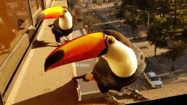 Tucanes: vecinos que nos alegran el día