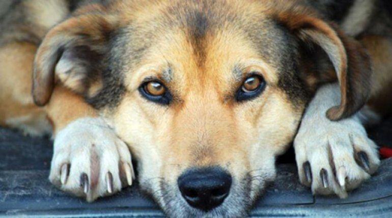 Puso agua y comida para los perros que andan por la calle pero alguien vino y sacó todo