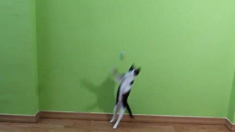 Una gata sorprende por su habilidad para atajar penales y es furor en redes