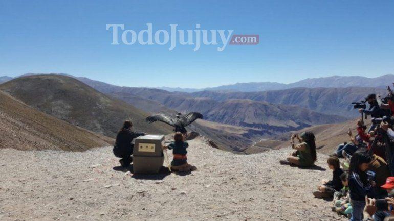 Resultado de imagen para Janpi Yaku, liberado en Jujuy