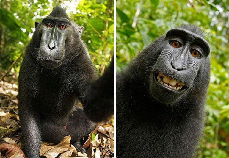 Las expresiones de los animales cuando llega el momento selfies