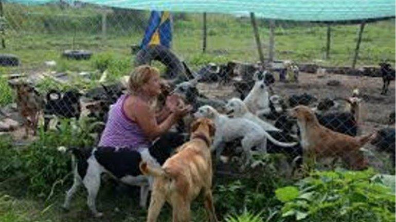 Los 452 perritos del Hogar San Roque necesitan la ayuda de todos