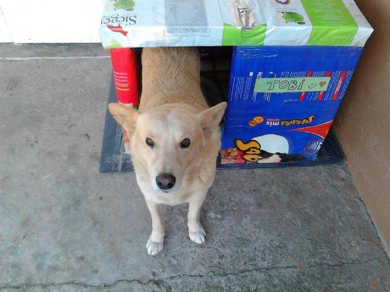 Cuchas para callejeritos: convocan en redes y les dan un techo a los perros de la calle