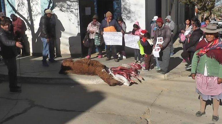 Protesta en Yavi por animales muertos
