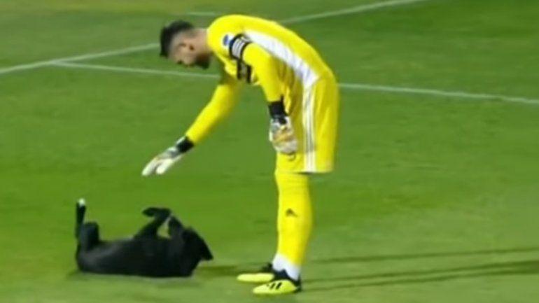 Un perro invadió una cancha de fútbol y no hubo forma de sacarlo
