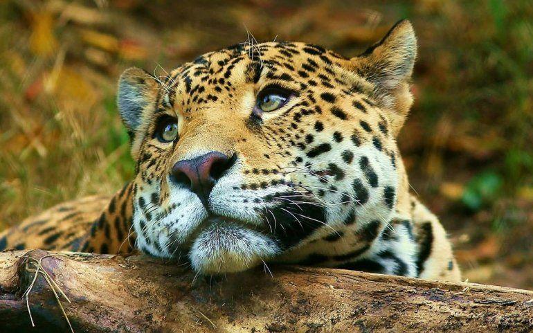 En los últimos 44 años el planeta perdió el 60% de los animales