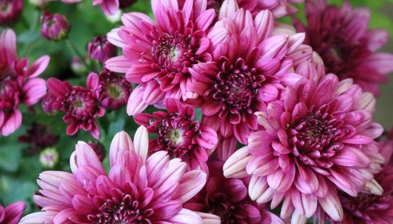 Para los amantes de las flores: el viernes arranca la Fiesta Provincial de Floricultura