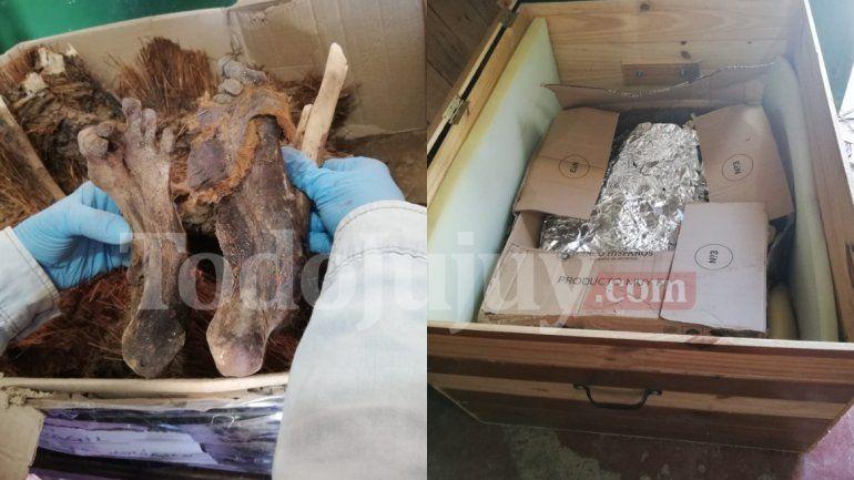 Avances en el hallazgo de la momia de Cochinoca: enviarán a Estados Unidos muestras para ser analizadas en profundidad
