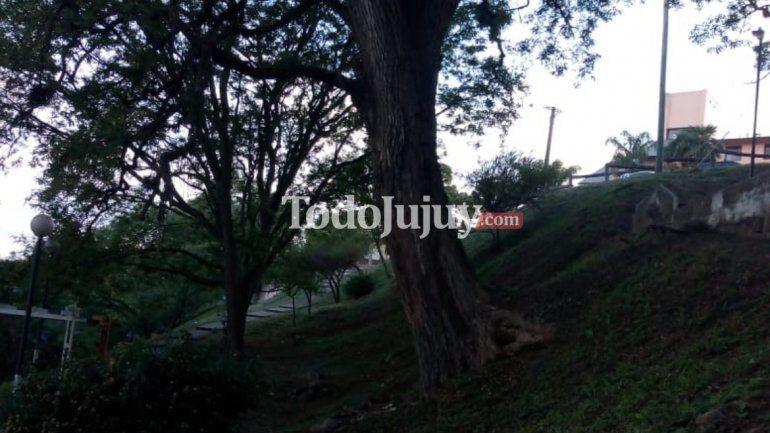Vecinos temen que un árbol se desplome y lastime a alguien