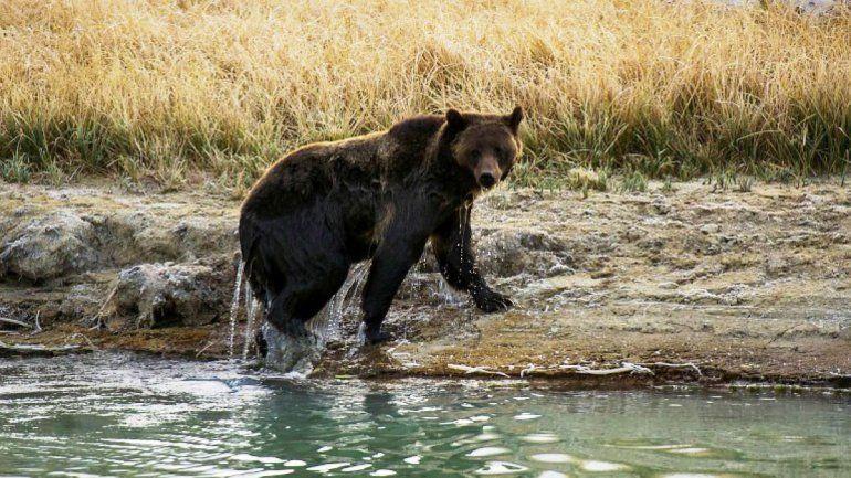 Eligieron vivir en una cabaña a orillas de un lago, pero un oso les arruinó la vida