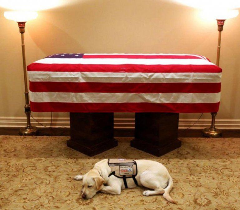 La imagen del perro de Bush que conmueve al mundo: Misión cumplida