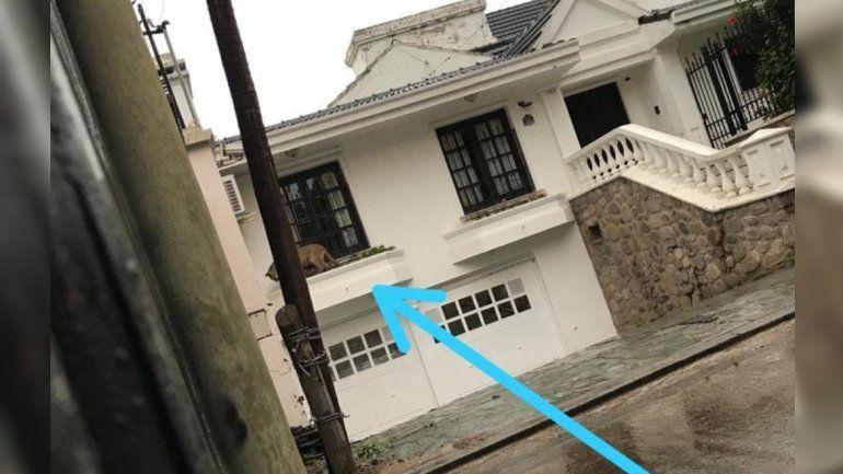 Un puma atemoriza Los Perales, apareció en una casa y es intensamente buscado