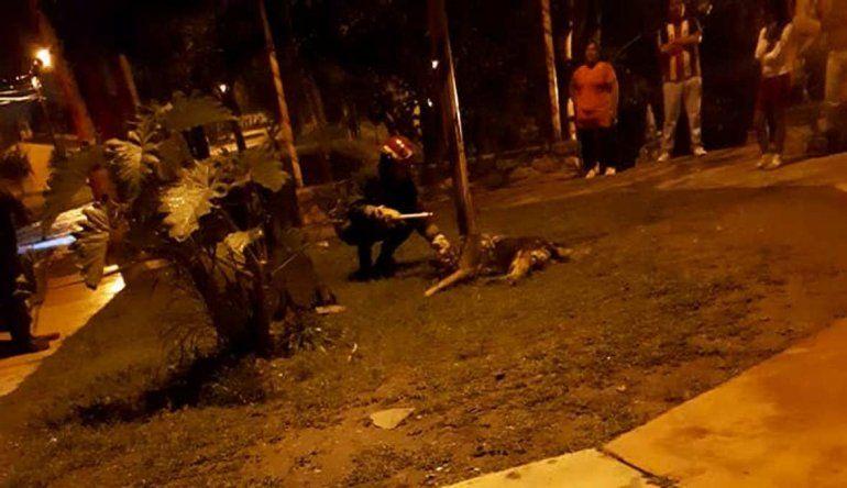 Vecinos denuncian que dos perros se electrocutaron con un poste de luz en una plaza