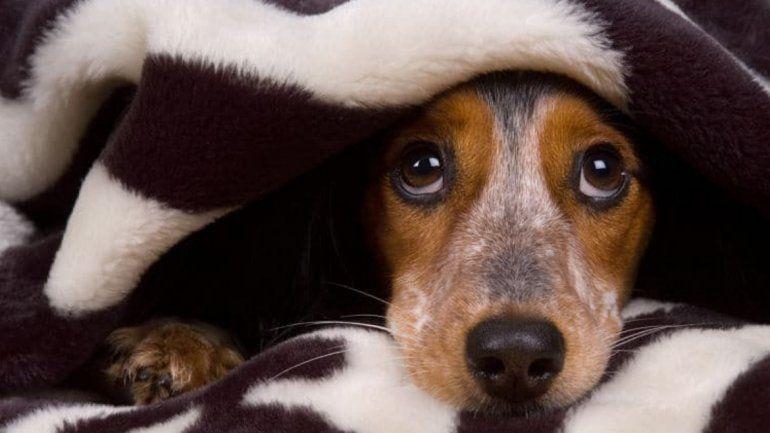 Consejos útiles para proteger a las mascotas de los estruendos de la pirotecnia