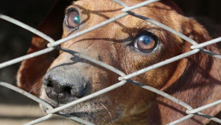 EEUU: prohíben la venta de animales nacidos en criaderos para promover la adopción de mascotas