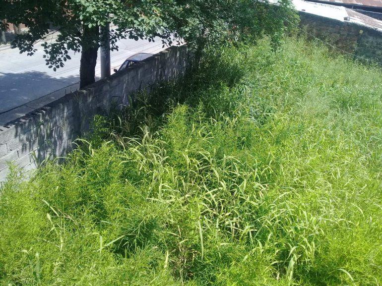 Falta de desmalezado en terrenos privados, un problema que se repite todos los veranos
