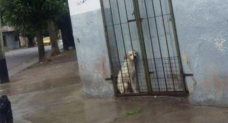 ¡Indignante! Dejaron un perro atrapado entre la puerta y una reja