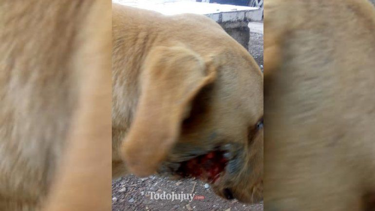 Buscan al dueño de un perrito que está perdido y lastimado en San Pedrito