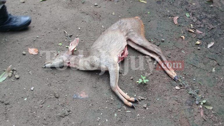 Cazadores furtivos en San Pedro: según el secretario de Biodiversidad podrían tener penas de 2 años por cazar animales nativos