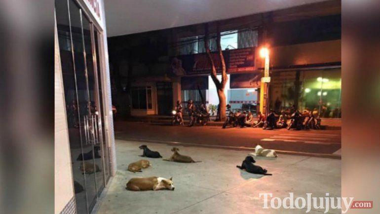 Vive en la calle, tuvo un derrame cerebral y sus perros hicieron guardia en el hospital