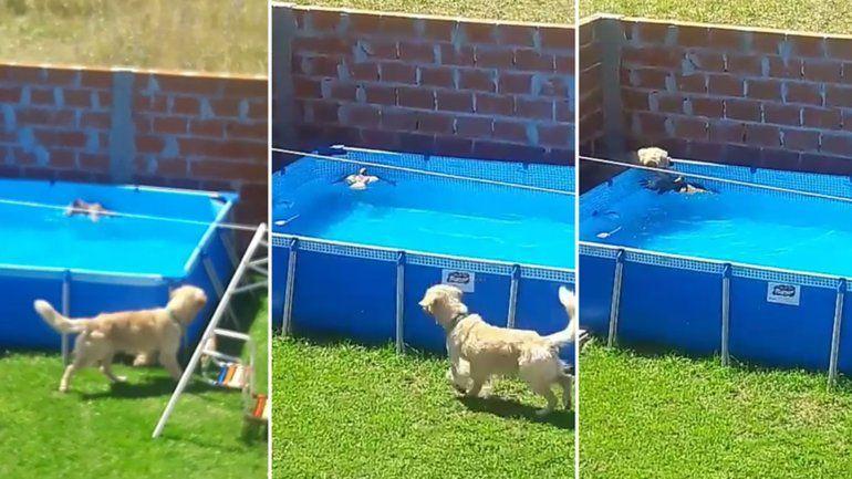 Yago, el perro rescatista que se hizo viral. Mirá el video