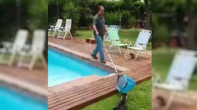 ¡Te atacó Martín!: rescataron un lagarto de la pileta y la reacción del animal conviritó el video en viral