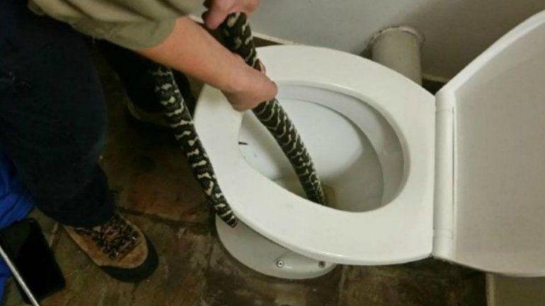 Insólito: una mujer se sentó en el inodoro y una serpiente la mordió