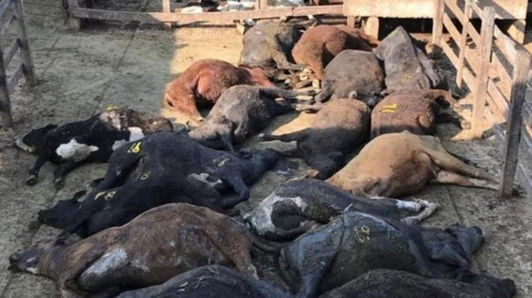 Buenos Aires: 100 animales murieron en el mercado de Liniers por el calor