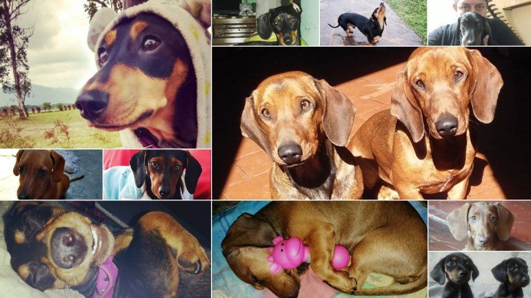 Los lectores de TodoJujuy.com celebraron el día del perro salchicha: mirá las fotos que nos enviaron