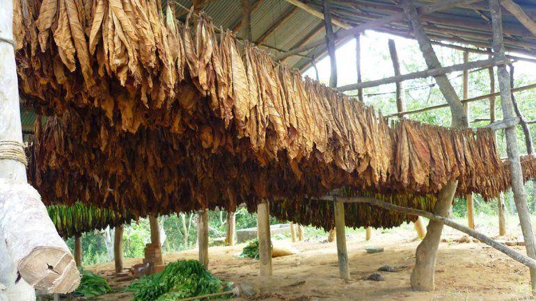 Alivio para el sector por el desembolso de 100 millones por el fondo tabacalero