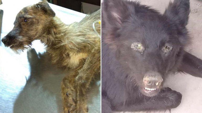 Otra vez maltrato animal: el horror que vivieron dos cachorros en diferentes familias