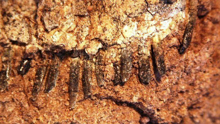 Encontraron en Neuquén una nueva especie de dinosaurio: el Bajadasaurus