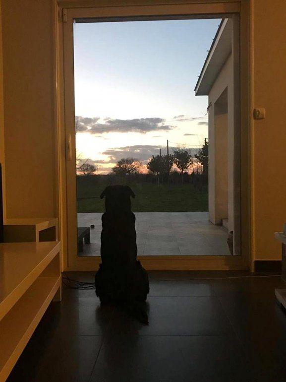 Nala, la perra de Emiliano Sala que todavía espera la vuelta de su mejor amigo