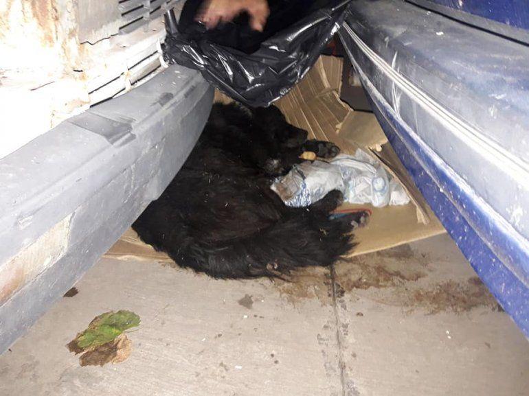 Buscan una familia para Negro, un perro callejero que está herido y necesita amor