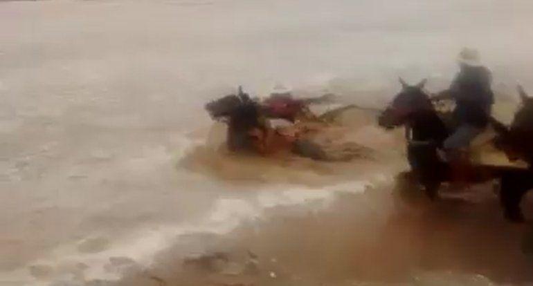 Salta: gaucho intentó cruzar a caballo un río crecido y los arrastró la corriente