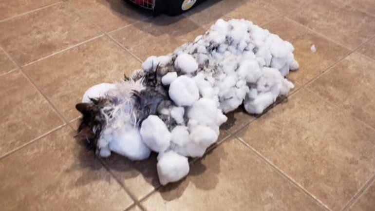 Volvió a la vida: un gato totalmente congelado, revivió