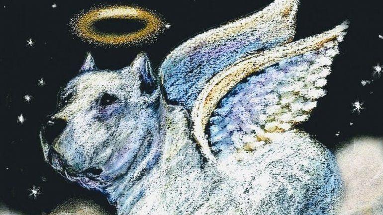 Tras la muerte de Gokú, invitan a una conferencia para concientizar sobre el maltrato animal
