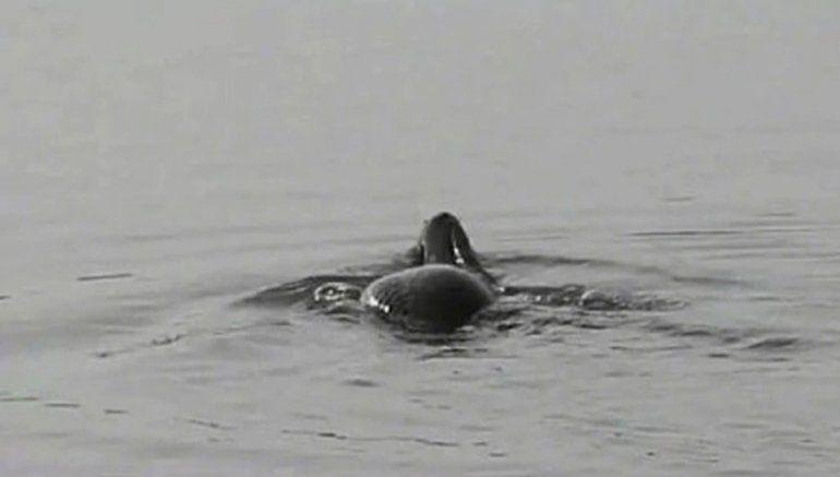 Una monstruosa criatura con cabeza de serpiente y cuerpo de tortuga atemoriza a China