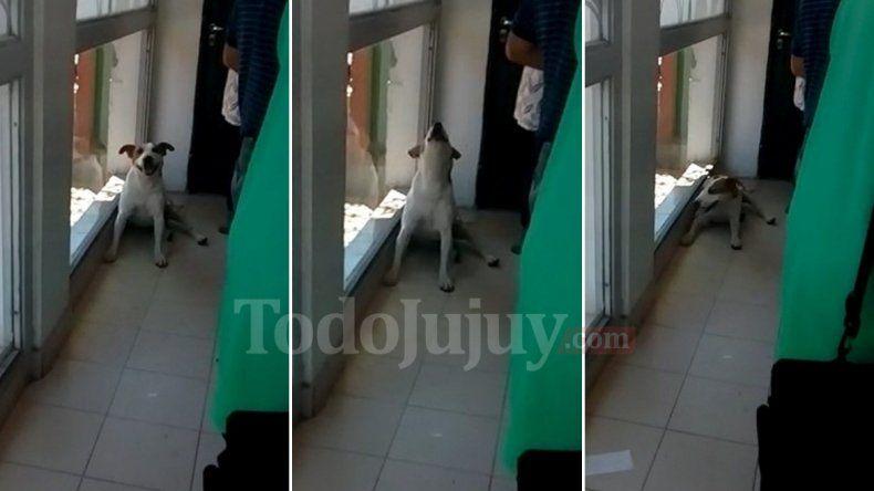 Ternura y dolor: un perrito llora desesperado buscando a su familia en un cajero
