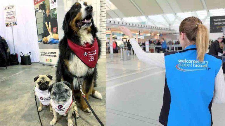 Contrataron perros de terapia para que los pasajeros esperen acompañados en un aeropuerto