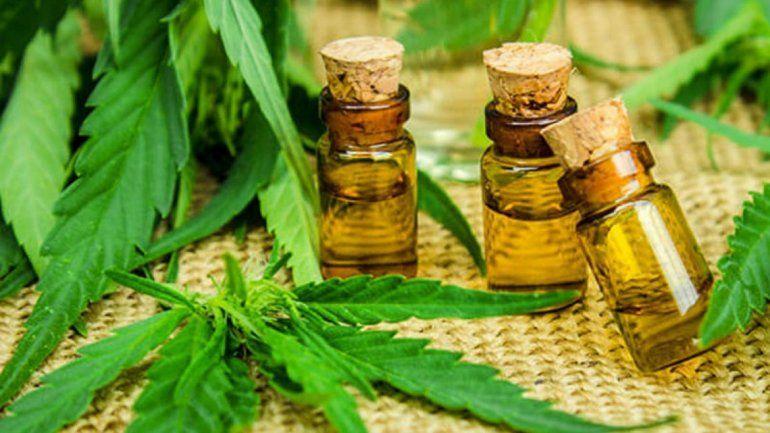 Preocupación de oncólogos por el creciente uso de aceite de cannabis sin prescripción médica