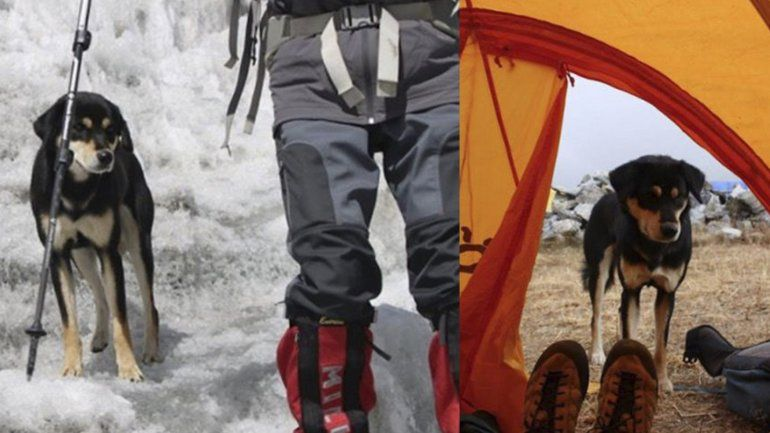 Perra callejera conquistó el Himalaya luego de encariñarse con un montañista
