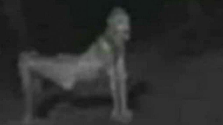 Una extraña criatura aterroriza a los vecinos de Libertador y Calilegua