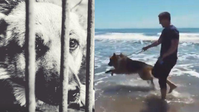 Un perro estuvo encadenado toda su vida y cuando conoció el mar saltó de felicidad