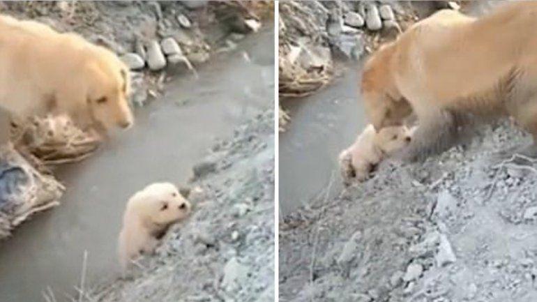 Un cachorro estaba a punto de caer a un río pero su mamá lo salvó