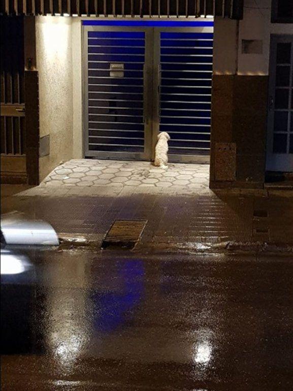 Buscan al dueño de un perrito perdido que se encuentra en la puerta de un edificio