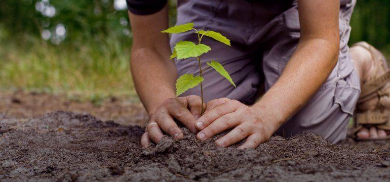 Plantarán árboles en el ingreso a Perico e invitan a los vecinos a sumarse