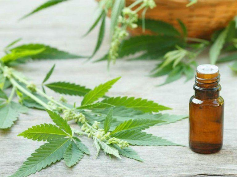 Cannabis medicinal: suspendieron una charla en la facultad de Agrarias y tuvieron que trasladarse al Parque Xibi Xibi