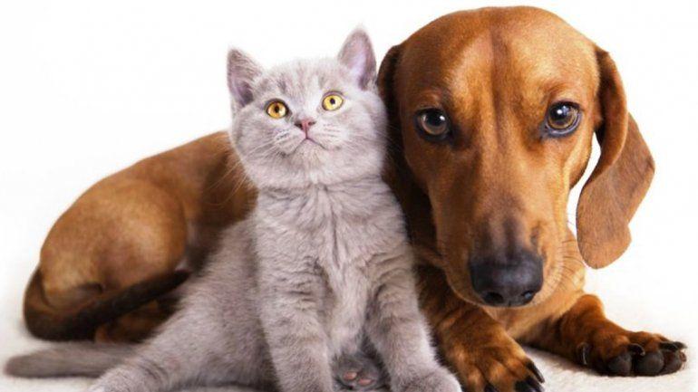 Hoy comienza la campaña de castración para perros y gatos en Palpalá