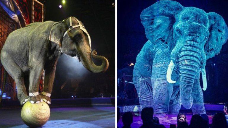 Un circo creó majestuosos hologramas para poder admirarlos sin maltratarlos